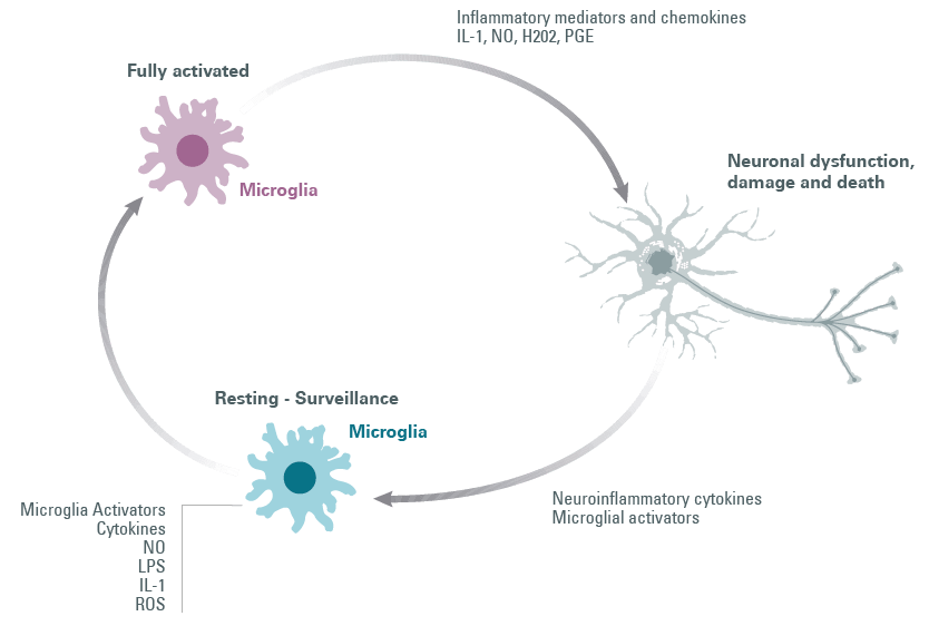 Microglial cell activation loop